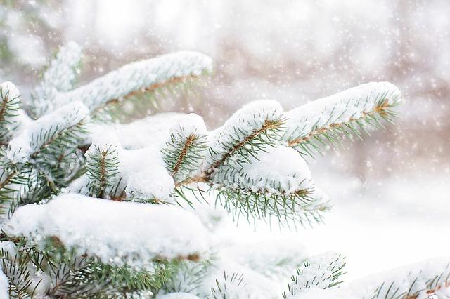 Die Weihnachtszeit ist eine Zeit besonderer Gnaden…