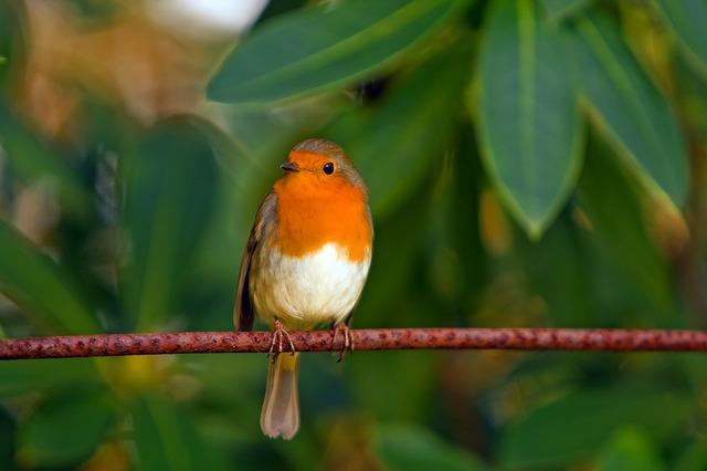 Warum plagst du dich mit schweren Gedanken, anstatt dich am Gesang der Vögel…